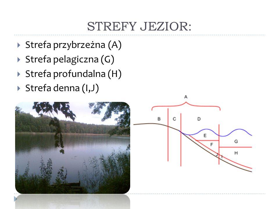 STREFY JEZIOR: Strefa przybrzeżna (A) Strefa pelagiczna (G)