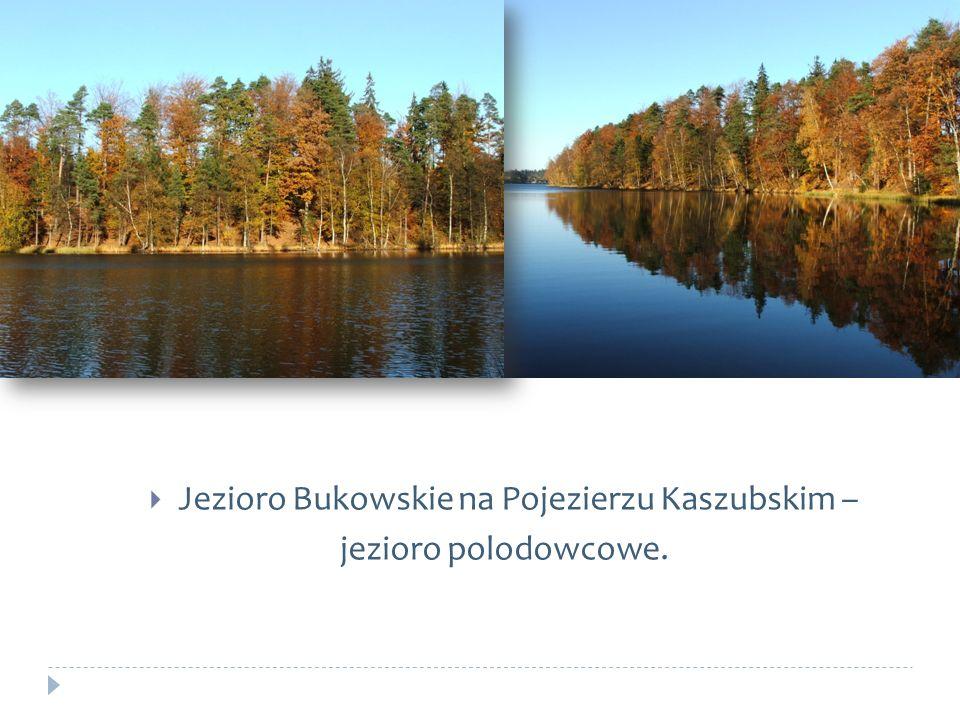 Jezioro Bukowskie na Pojezierzu Kaszubskim –