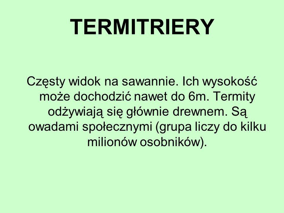 TERMITRIERY