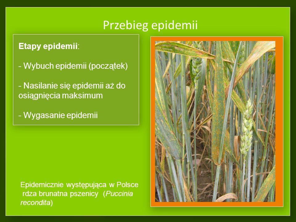 Przebieg epidemii Etapy epidemii: Wybuch epidemii (początek)