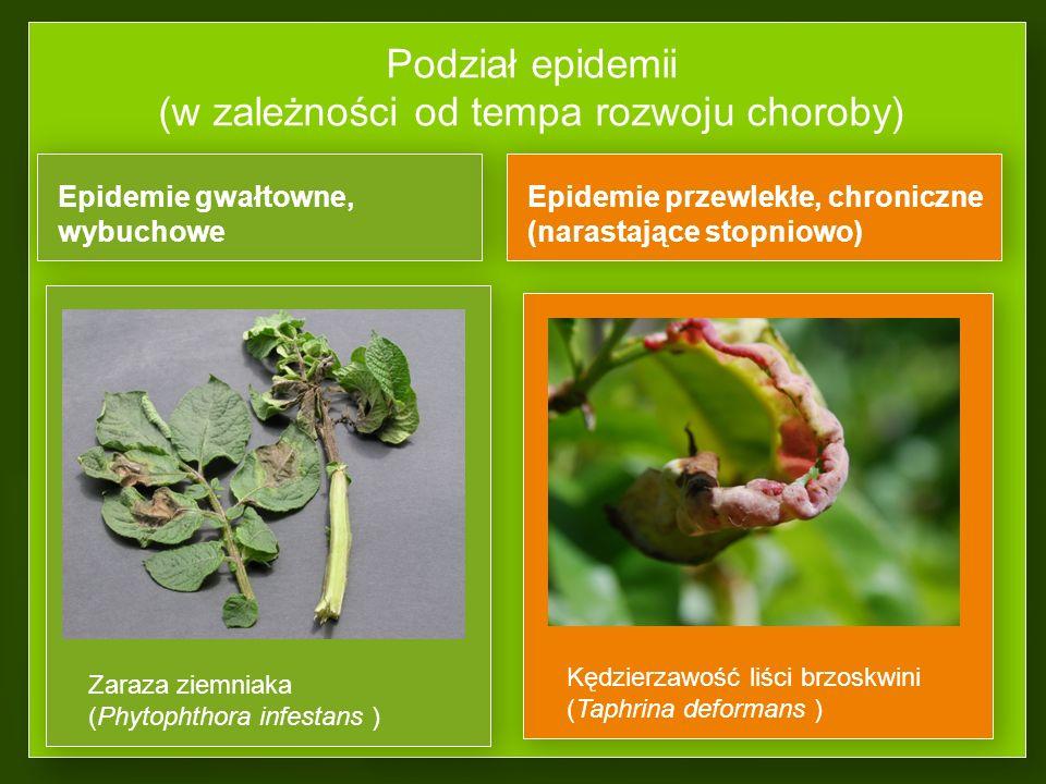 Podział epidemii (w zależności od tempa rozwoju choroby)