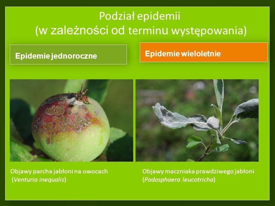 Podział epidemii (w zależności od terminu występowania)