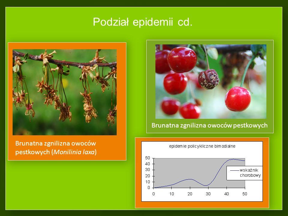 Podział epidemii cd. Brunatna zgnilizna owoców pestkowych