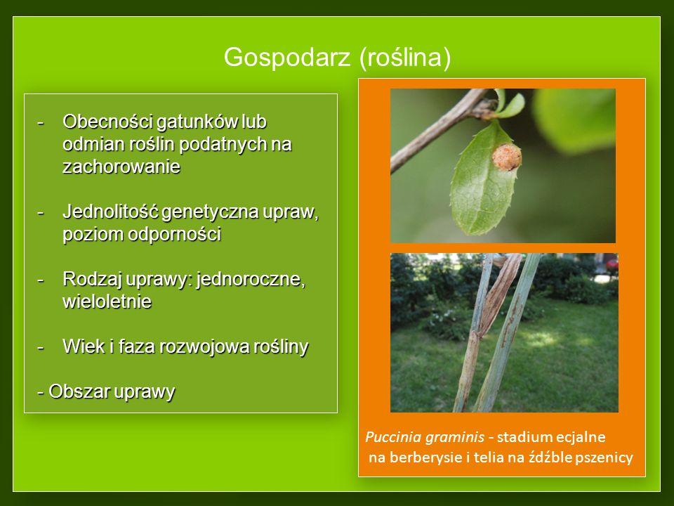 Gospodarz (roślina) Obecności gatunków lub odmian roślin podatnych na zachorowanie. Jednolitość genetyczna upraw, poziom odporności.