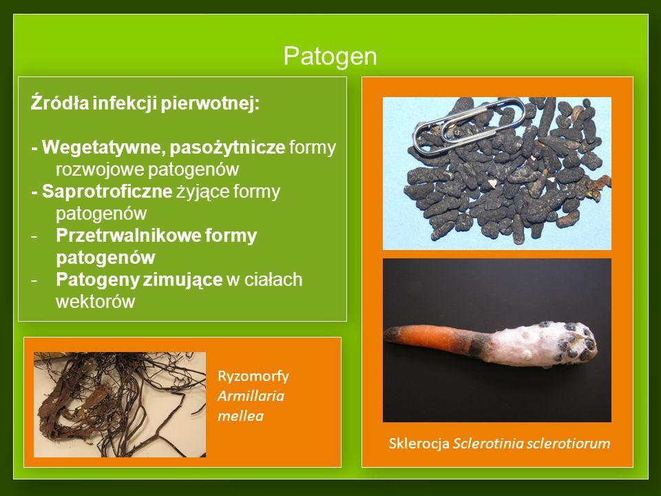 Patogen Źródła infekcji pierwotnej: