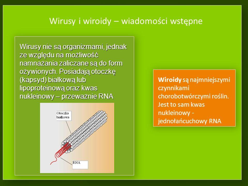 Wirusy i wiroidy – wiadomości wstępne