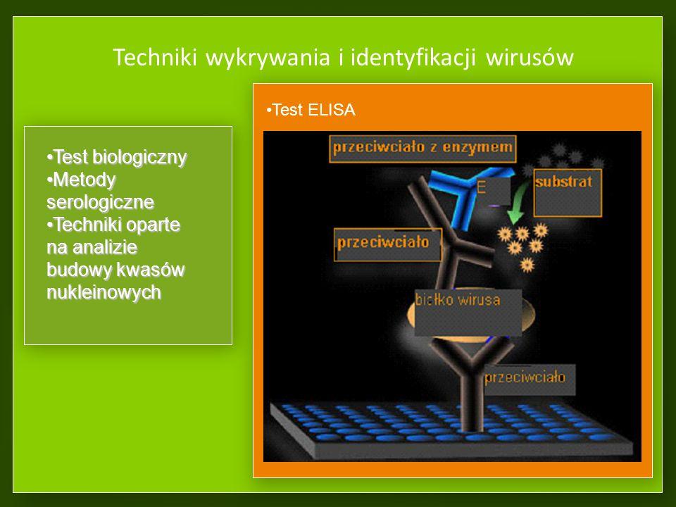 Techniki wykrywania i identyfikacji wirusów
