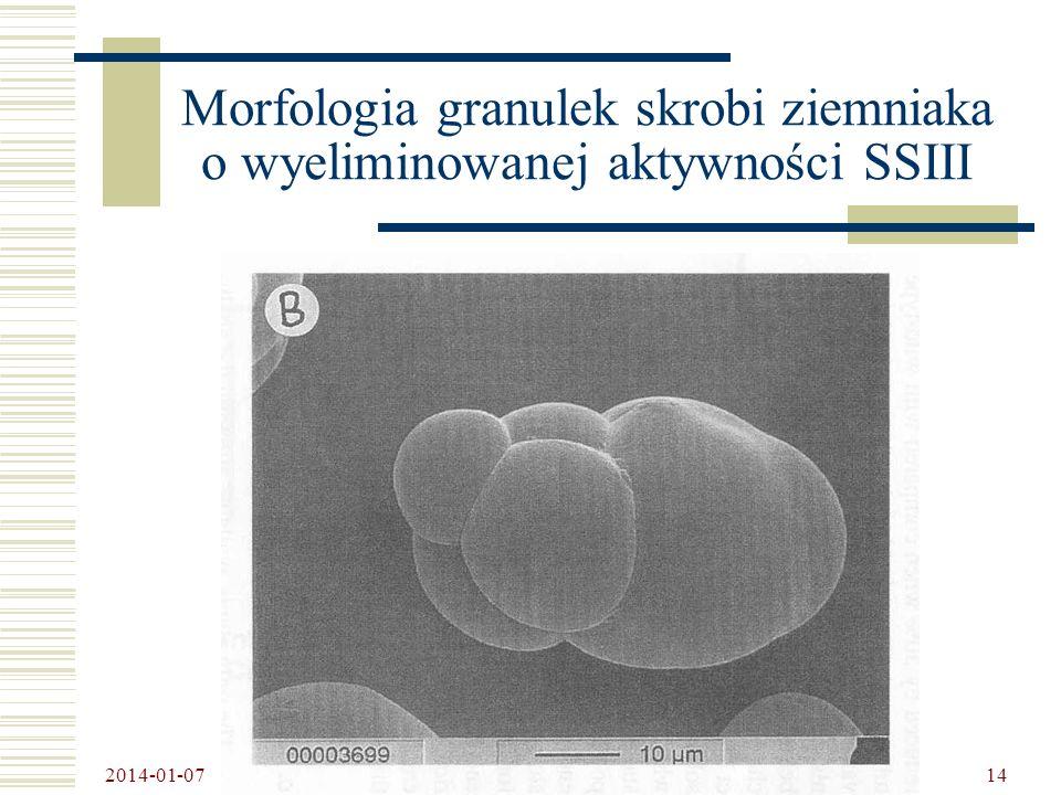 Morfologia granulek skrobi ziemniaka o wyeliminowanej aktywności SSIII