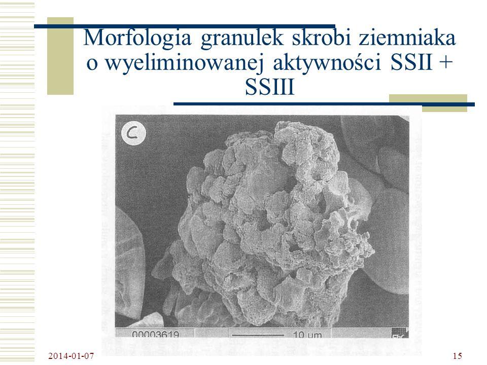 Morfologia granulek skrobi ziemniaka o wyeliminowanej aktywności SSII + SSIII