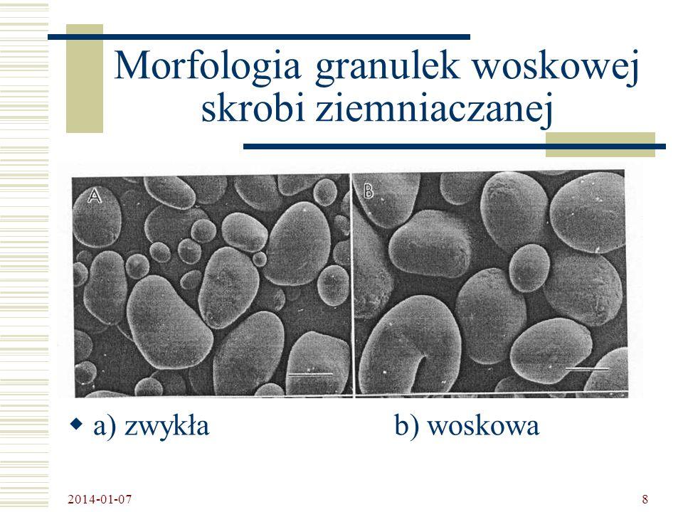 Morfologia granulek woskowej skrobi ziemniaczanej