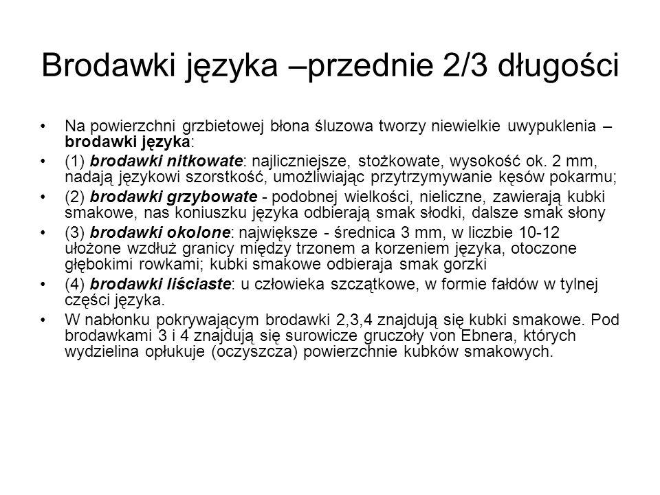 Brodawki języka –przednie 2/3 długości