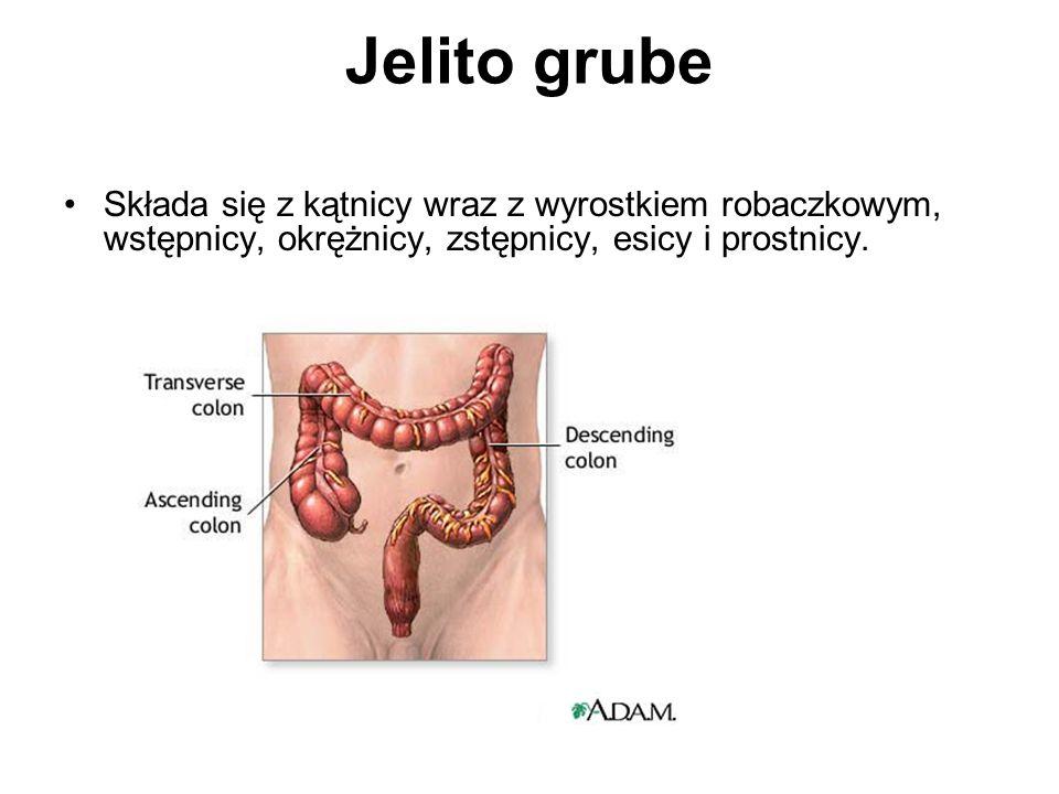 Jelito grube Składa się z kątnicy wraz z wyrostkiem robaczkowym, wstępnicy, okrężnicy, zstępnicy, esicy i prostnicy.
