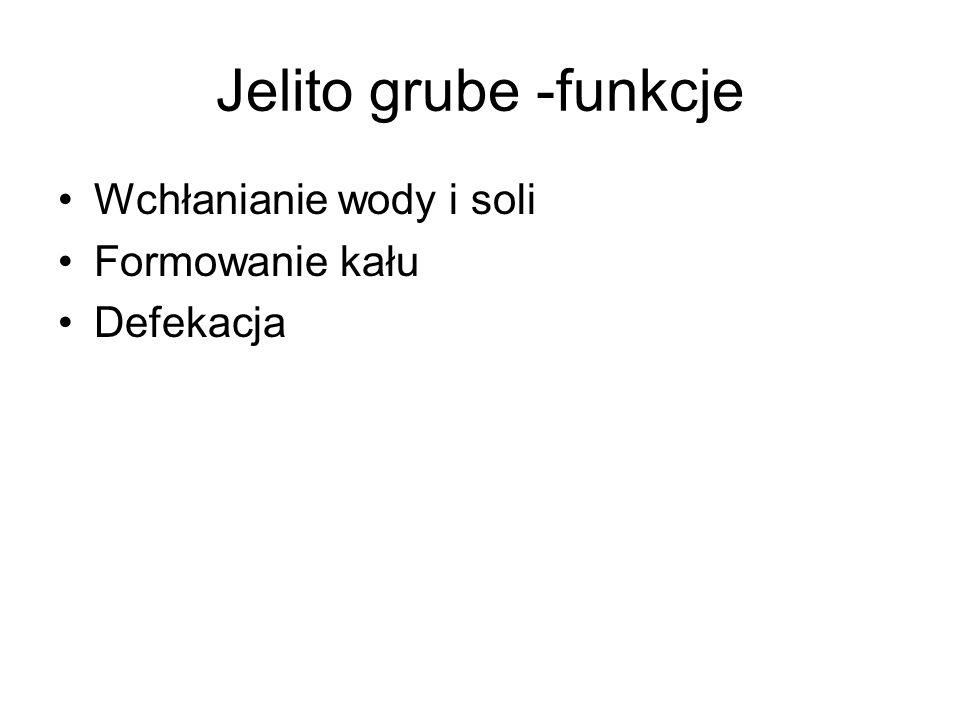 Jelito grube -funkcje Wchłanianie wody i soli Formowanie kału