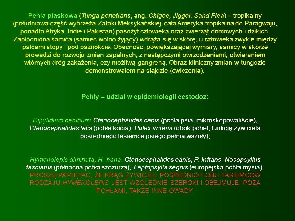 Pchły – udział w epidemiologii cestodoz: