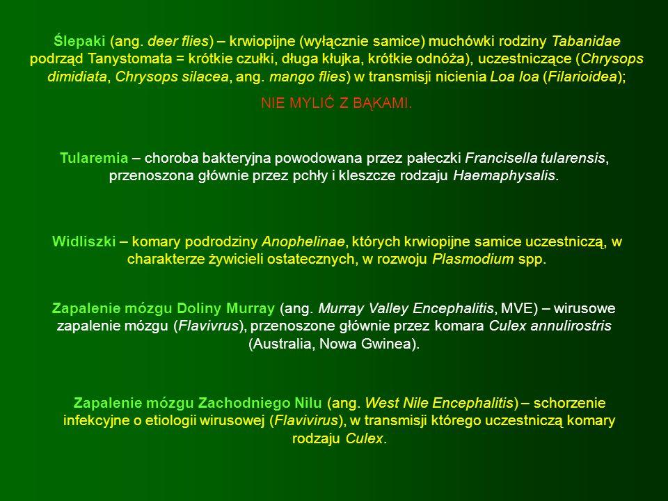 Ślepaki (ang. deer flies) – krwiopijne (wyłącznie samice) muchówki rodziny Tabanidae podrząd Tanystomata = krótkie czułki, długa kłujka, krótkie odnóża), uczestniczące (Chrysops dimidiata, Chrysops silacea, ang. mango flies) w transmisji nicienia Loa loa (Filarioidea);