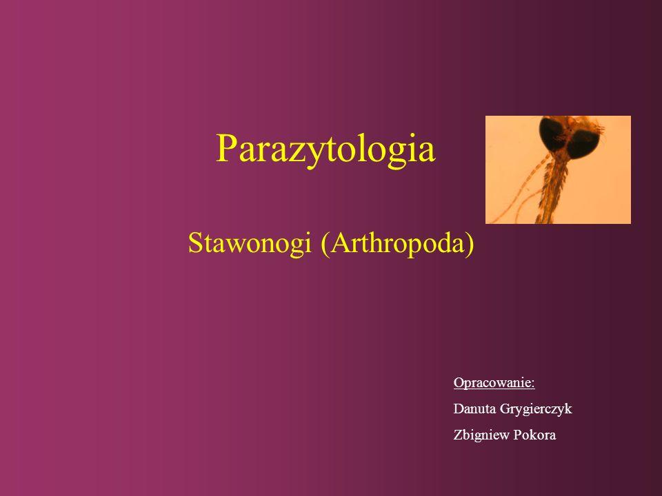 Stawonogi (Arthropoda)