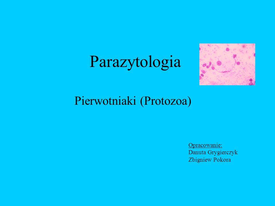 Pierwotniaki (Protozoa)