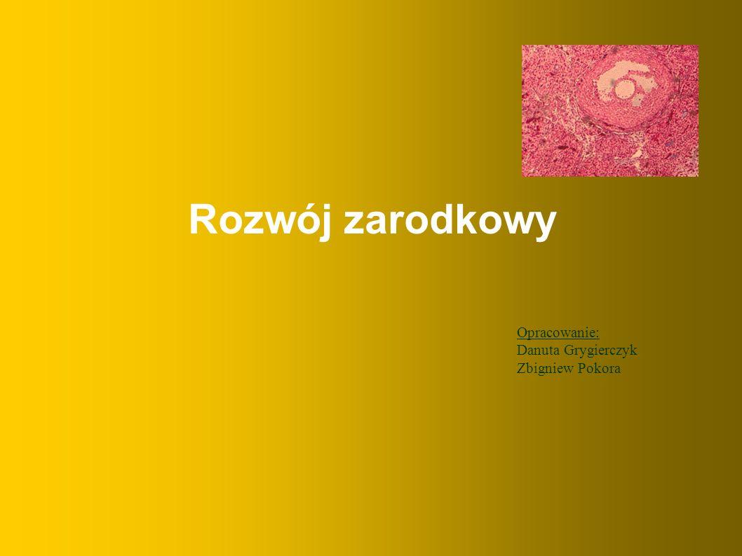 Rozwój zarodkowy Opracowanie: Danuta Grygierczyk Zbigniew Pokora