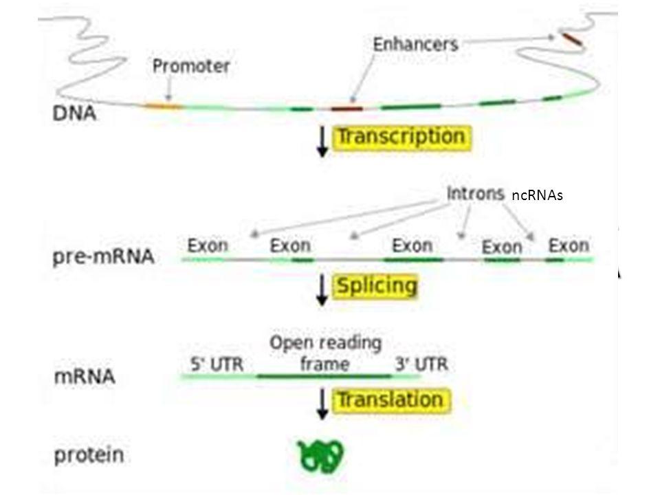 POWSZECHNIE POD POJĘCIEM GENU ROZUMIE SIĘ SEKWENCJĘ DNA, SŁUŻĄCĄ JAKO INFORMACJA GENETYCZNA, TRANSKRYBOWANA DO KODUJĄCYCH BIAŁKO CZĄSTECZEK RNA