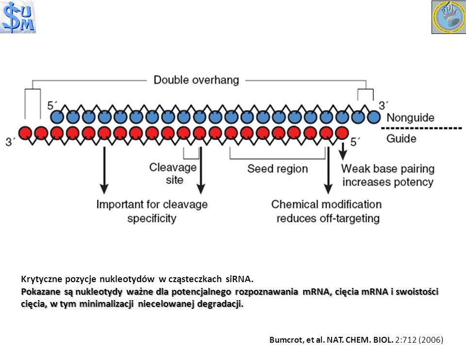 Krytyczne pozycje nukleotydów w cząsteczkach siRNA.