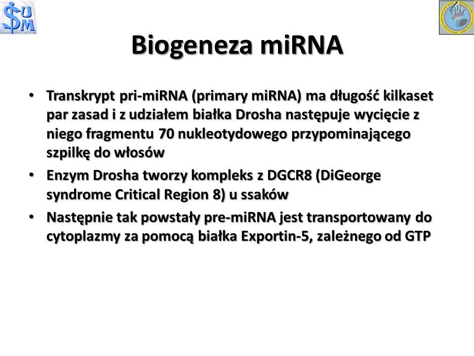 Biogeneza miRNA