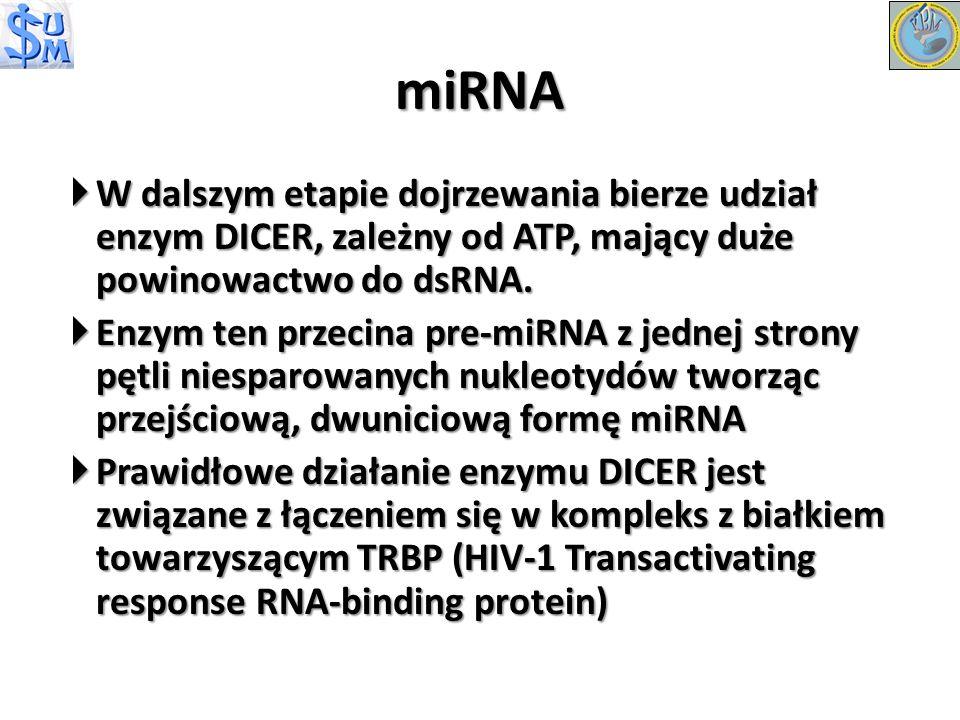 miRNA W dalszym etapie dojrzewania bierze udział enzym DICER, zależny od ATP, mający duże powinowactwo do dsRNA.