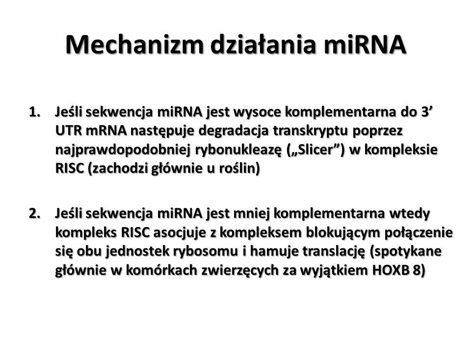 Mechanizm działania miRNA