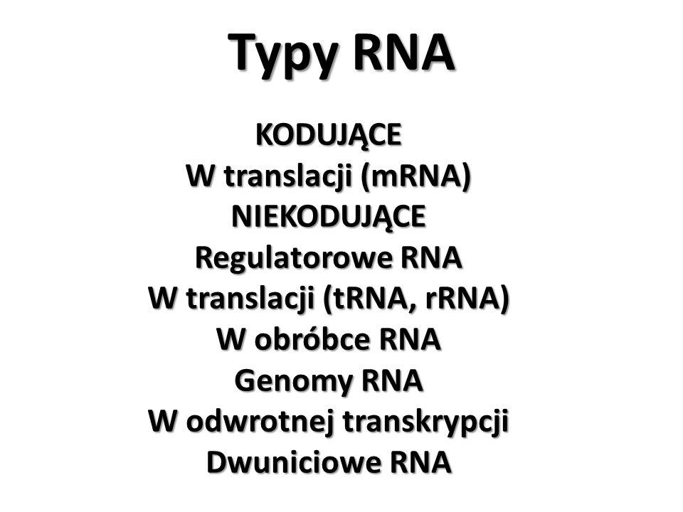 W translacji (tRNA, rRNA) W odwrotnej transkrypcji