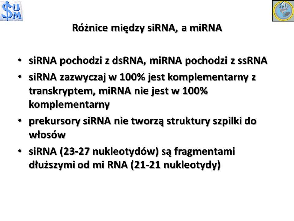 Różnice między siRNA, a miRNA