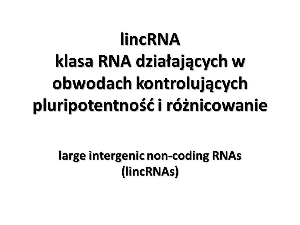 large intergenic non-coding RNAs (lincRNAs)