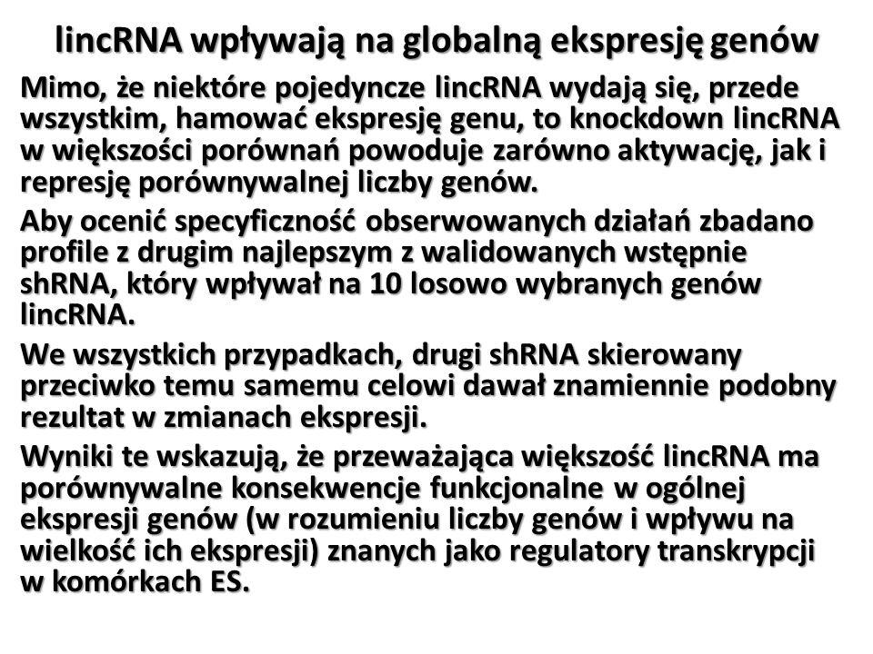 lincRNA wpływają na globalną ekspresję genów