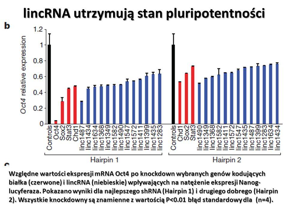 lincRNA utrzymują stan pluripotentności