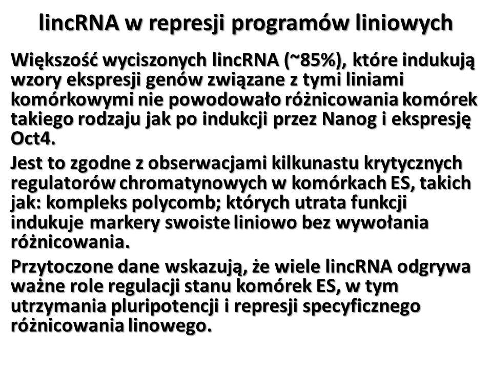 lincRNA w represji programów liniowych