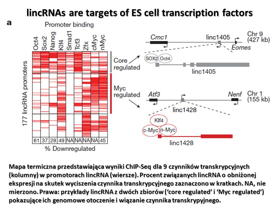 lincRNAs are targets of ES cell transcription factors