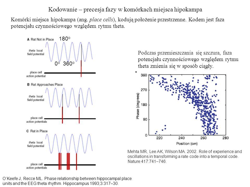 Kodowanie – precesja fazy w komórkach miejsca hipokampa