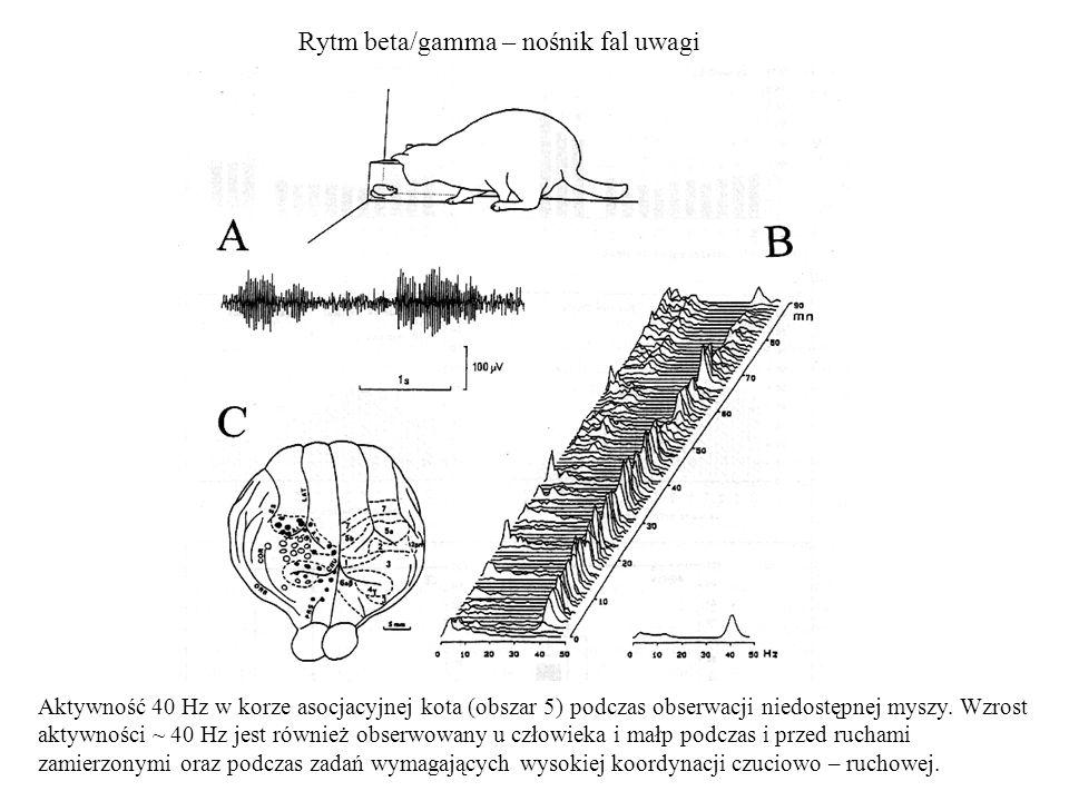 Rytm beta/gamma – nośnik fal uwagi