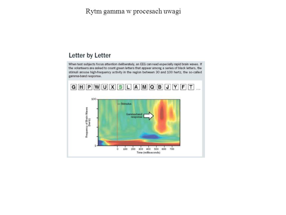 Rytm gamma w procesach uwagi