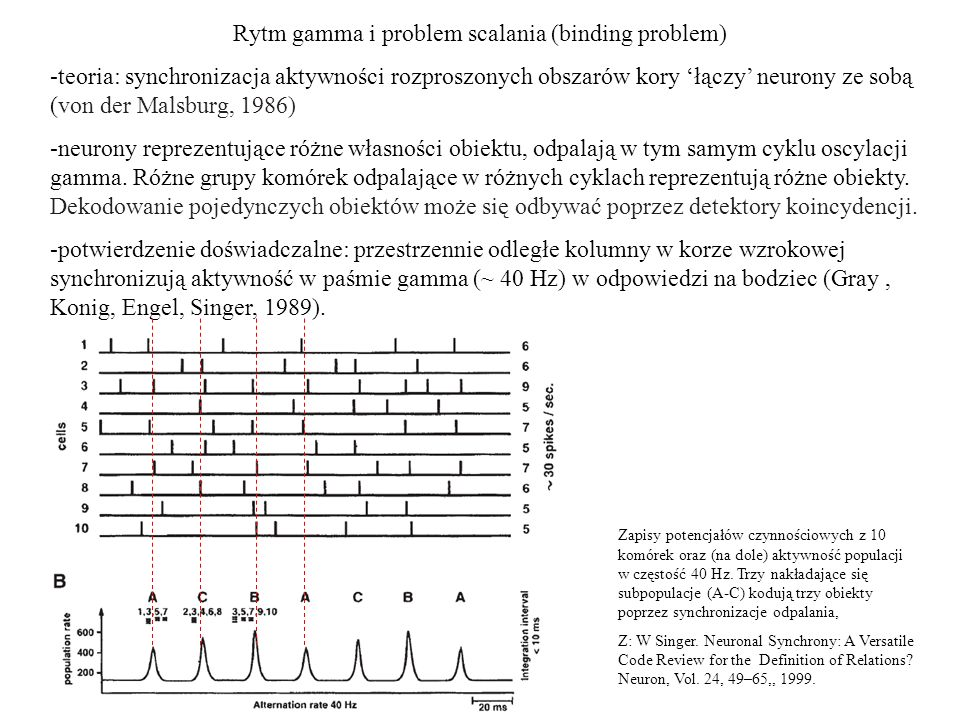 Rytm gamma i problem scalania (binding problem)