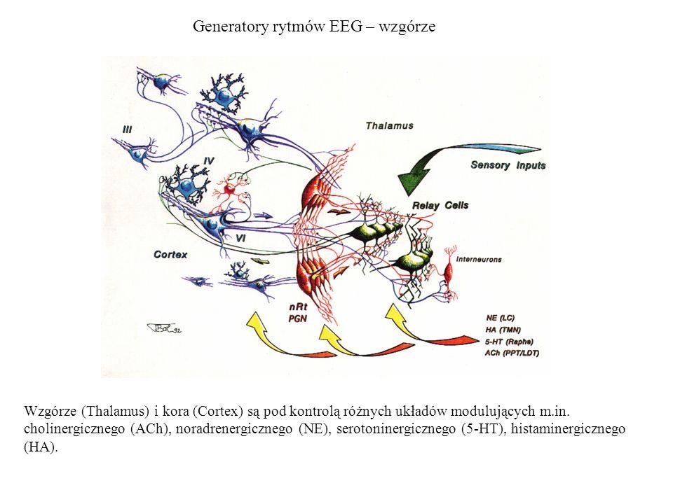 Generatory rytmów EEG – wzgórze
