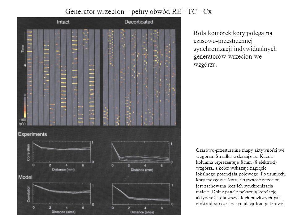 Generator wrzecion – pełny obwód RE - TC - Cx