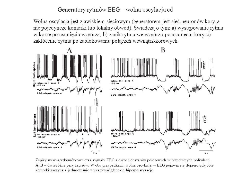 Generatory rytmów EEG – wolna oscylacja cd