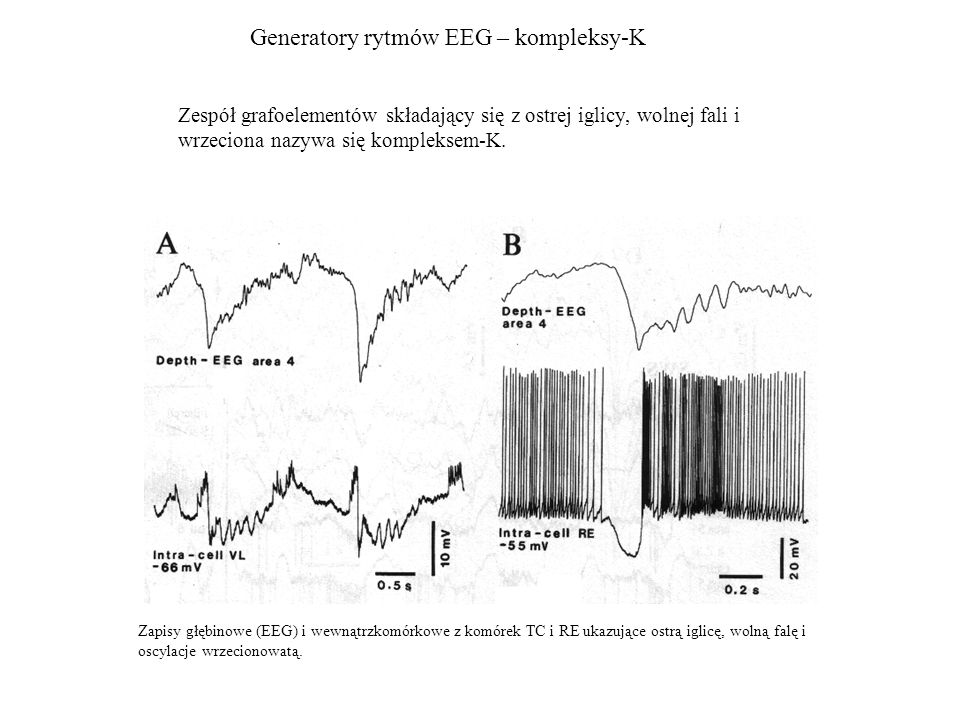 Generatory rytmów EEG – kompleksy-K
