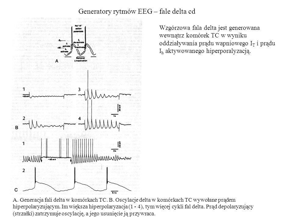 Generatory rytmów EEG – fale delta cd