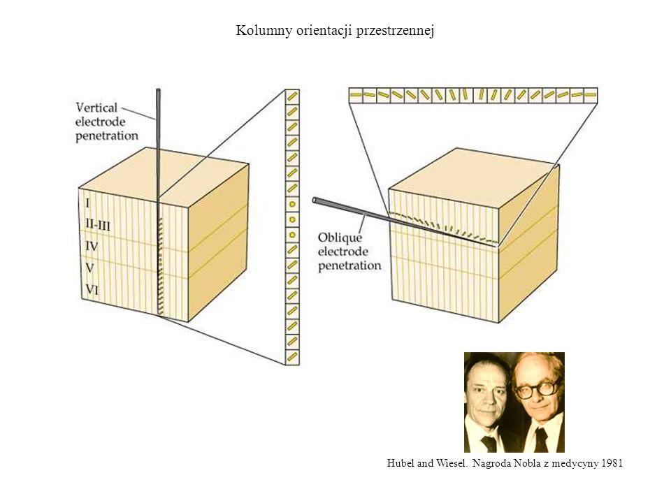 Kolumny orientacji przestrzennej