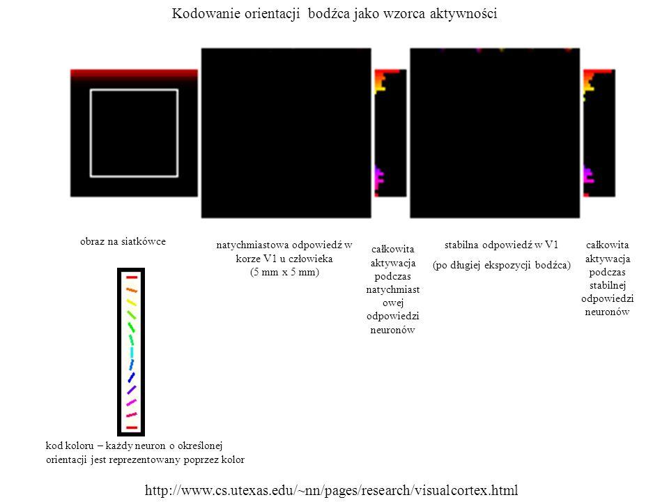 Kodowanie orientacji bodźca jako wzorca aktywności