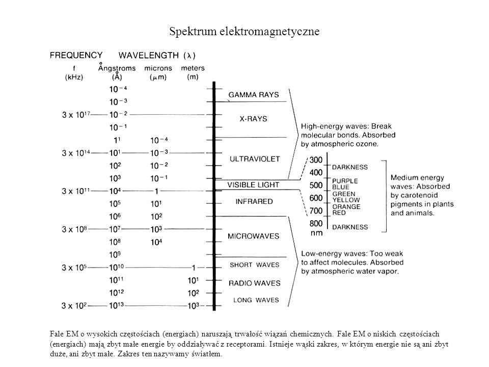Spektrum elektromagnetyczne