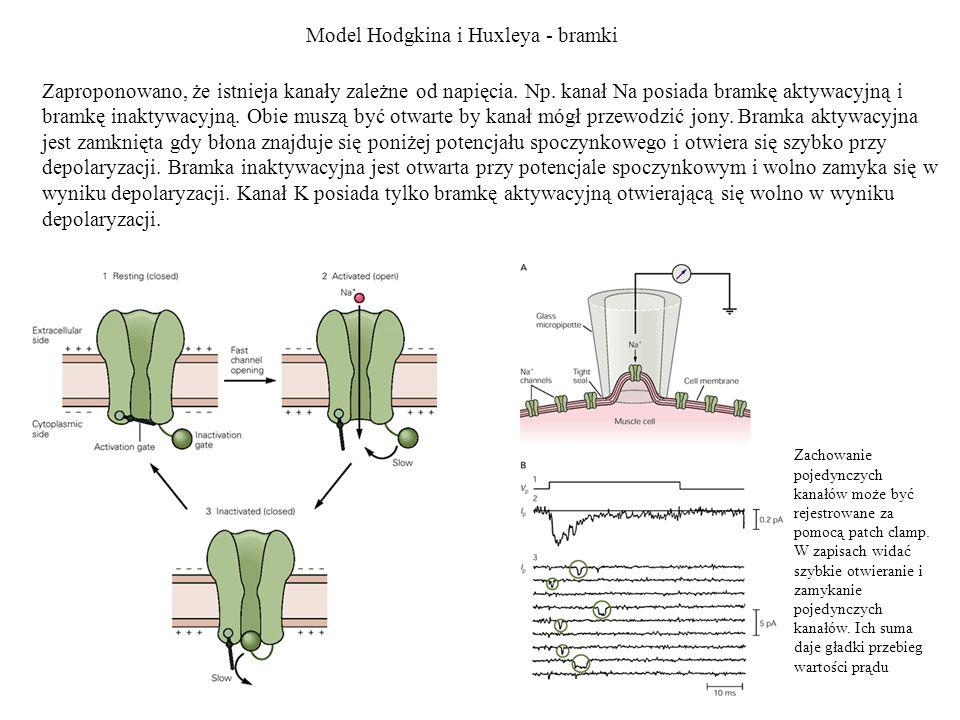 Model Hodgkina i Huxleya - bramki
