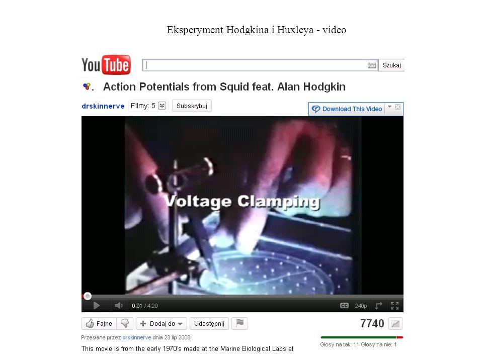 Eksperyment Hodgkina i Huxleya - video