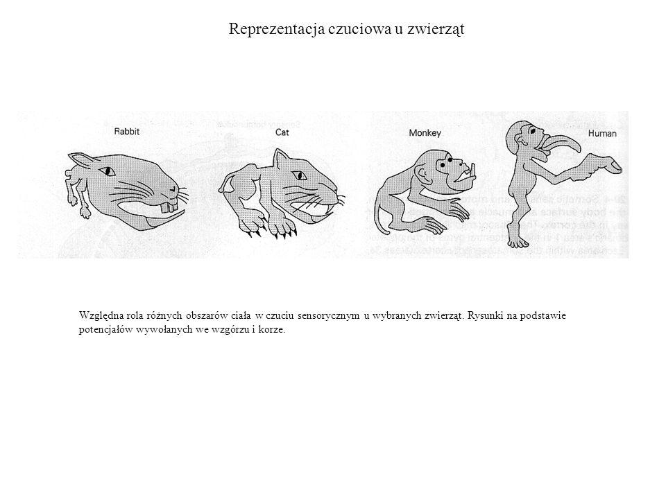 Reprezentacja czuciowa u zwierząt