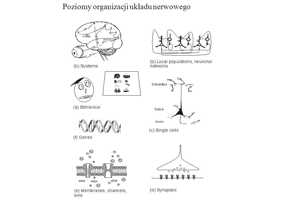 Poziomy organizacji układu nerwowego
